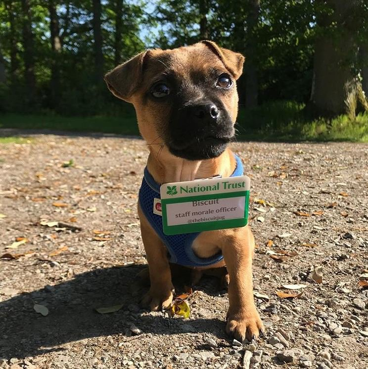 Bring your dog to work day https://twitter.com/nationaltrust/status/1141995442932203520 Picture: nationaltrust
