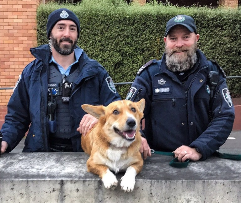 Bring your dog to work day https://twitter.com/AusFedPolice/status/1141905960773926912 Picture: AusFedPolice