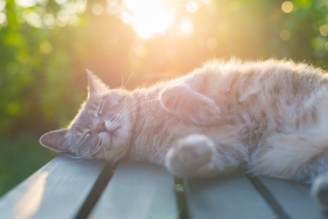 A cute cat lying in the sun