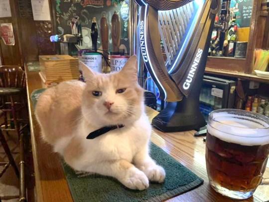 Un intero villaggio ha festeggiato il compleanno di un gatto