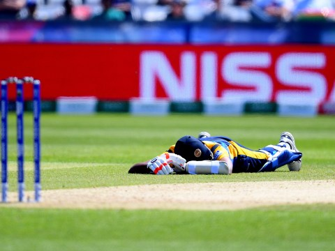 Sri Lanka v South Africa temporarily suspended after bees attack