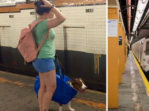 Commuter's genius trick to beat rule that dogs can only travel if they fit in a bag