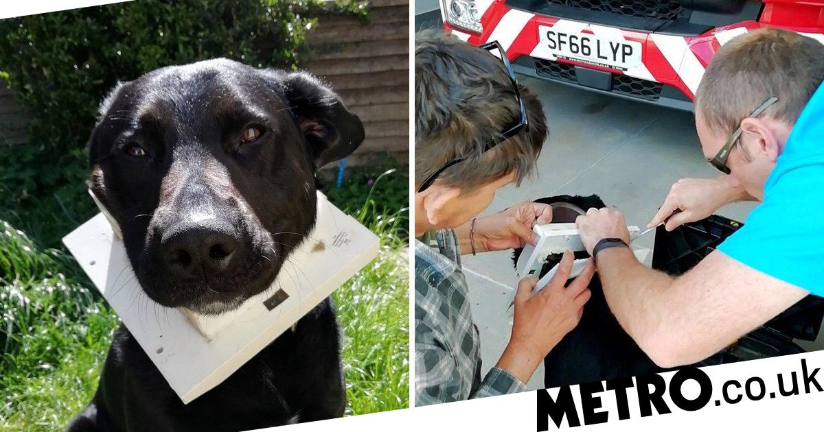 Clumsy dog rescued by firefighters after getting his head stuck in a cat flap