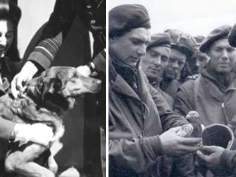 How pigeons and parachuting dogs helped on D-Day