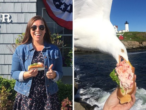 Seagull steals woman's lobster roll while she's taking a photo