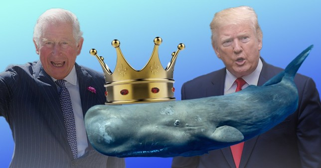 Donald Trump gave his Twitter followers a laugh after mistakenly referring to Prince Charles as 'the Prince of Whales'
