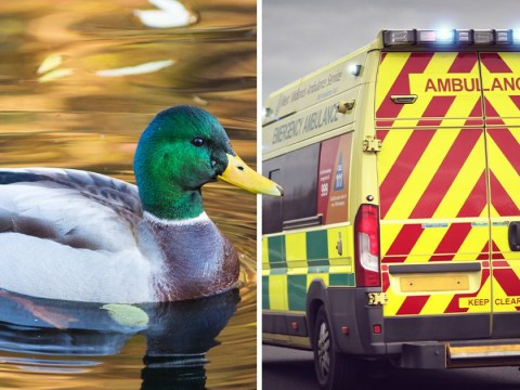 Man causes outrage by calling 999 over dead duck: 'I don't know what to do'