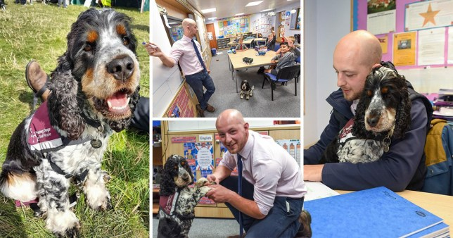 The faithful dog alerts Mr Sage with a tap if a pupil raises their hand when his back is turned, and also lets him known when timers go off if he sets the class timed work (Picture: Caters News Agency)