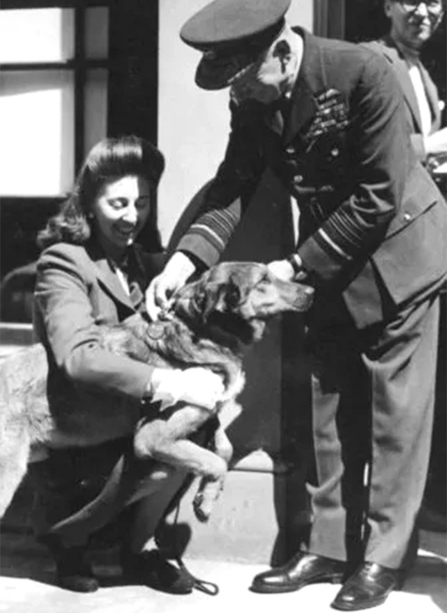 Brian the Alsatian, also known as Bing, receiving PDSA Dickin Medal in 1944 for his D-Day heroics (Picture: Dix Noonan Webb Ltd)