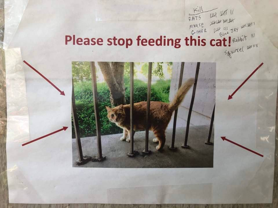 Poster of Cheeto a fat cat, with a difference 'stop feeding this cat'