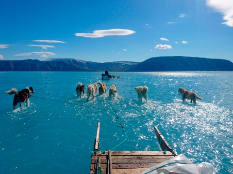 Husky dogs pictured walking on water where there should be ice in Greenland
