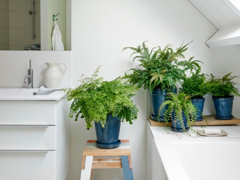 The best plants to put in your bathroom