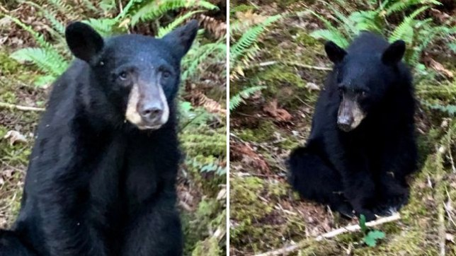 This black bear cub was shot dead by wildlife officials over the weekend after people fed it, posed for selfies with it, and got it too accustomed to human contact