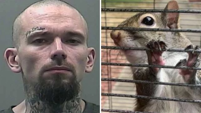 Ronnie Reynolds is accused of illegally keeping a squirrel as a pet, and feeding it crystal meth to turn it into an aggressive 'attack squirrel' capable of defending him