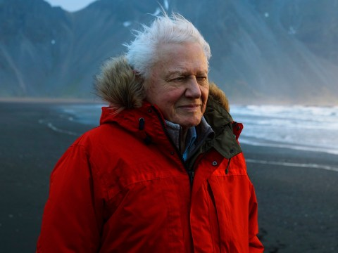 First trailer for David Attenborough's new BBC documentary Seven Worlds, One Planet is here and we're besides ourselves