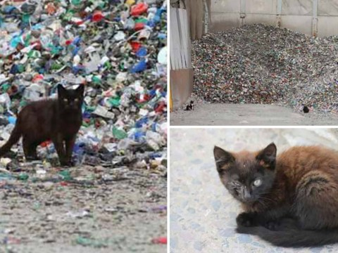 Huge hoard of cats discovered living on dump surviving on rubbish