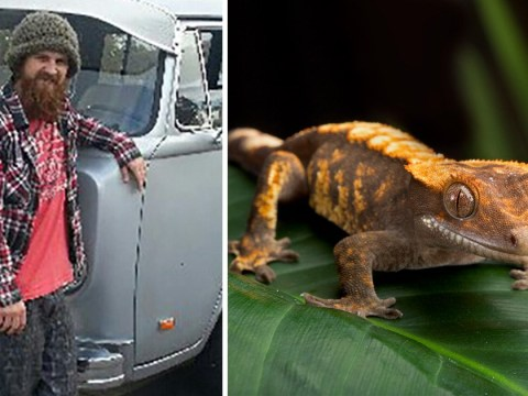 Man dies 'in agony ten days after being dared to eat a gecko'