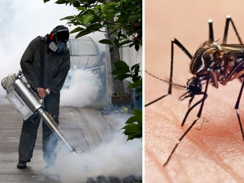 Dengue fever could spread to Europe due to climate change, scientists warn