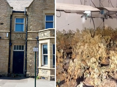Police find cannabis farm with over 1,000 plants growing in their old building