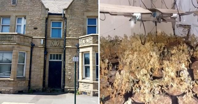 GMP Failsworth & Hollinwood abandoned station turned into cannabis farm