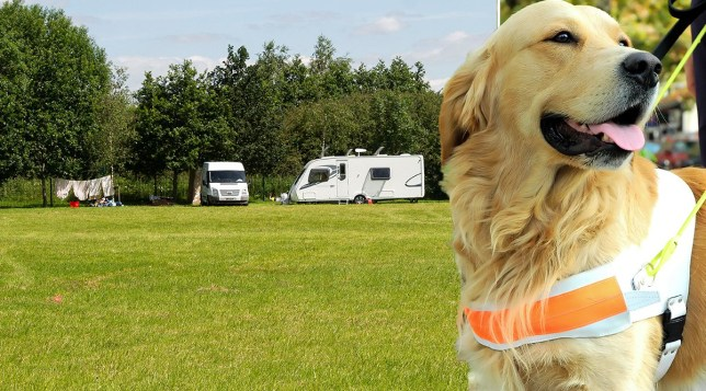A Guide Dog charity has been forced to cancel its annual summer fete after travellers moved onto their field
