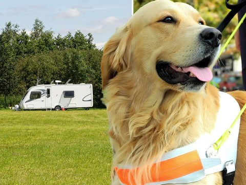 Guide dog charity cancels summer fete after travellers move in