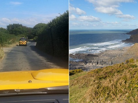 Man crushed to death by rocks falling from cliff above National Trust beach