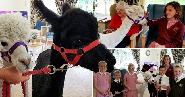 Residents with the alpacas