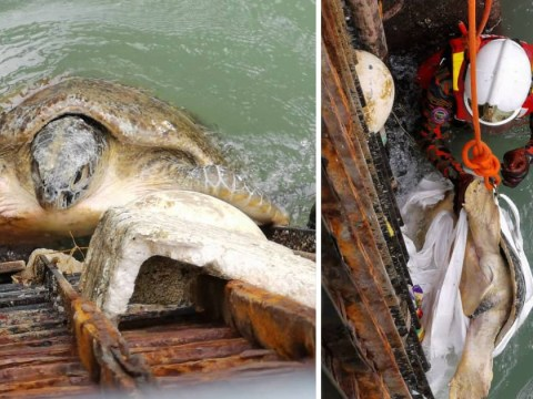 Turtle rescued from rubbish trap that was meant to protect it