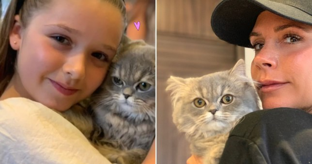 Victoria Beckham and Harper Beckham cuddle their new grey cat