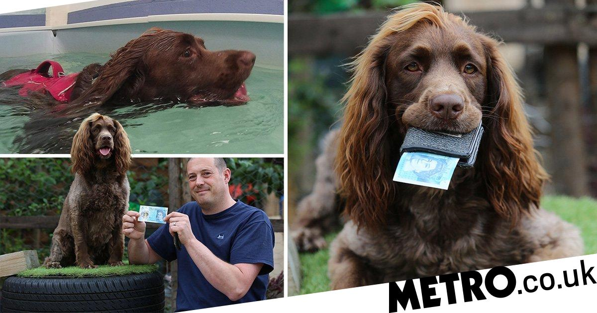 Bracken the dog gets £5 pocket money every week to spend on toys and treats