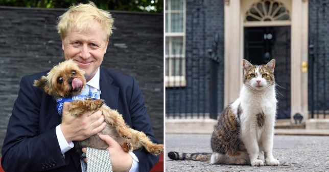 Chief Mouser To The Cabinet could be ousted under Boris