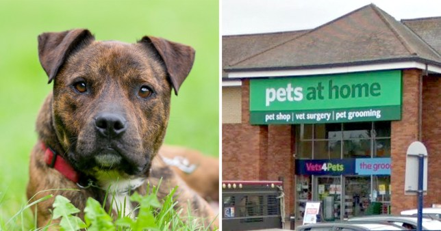 Vet who attacked dog in Market Harborough still allowed to work