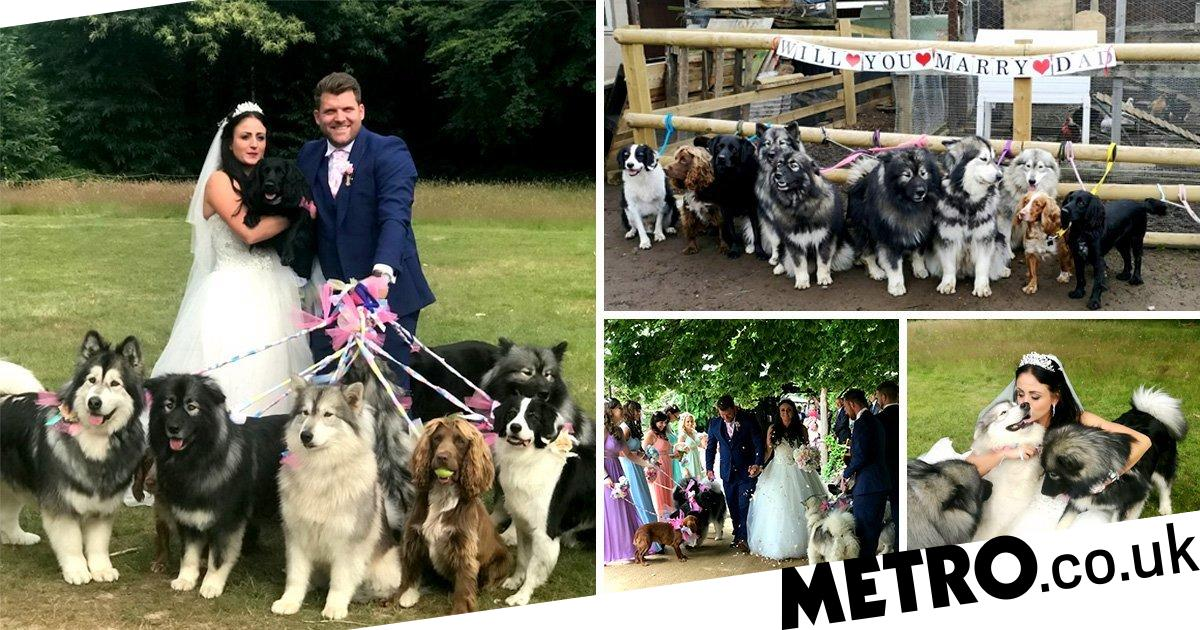 Couple got married and had a dozen dogs attend with one as their best man