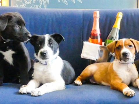 There's a hotel that will bring puppies and prosecco to your room