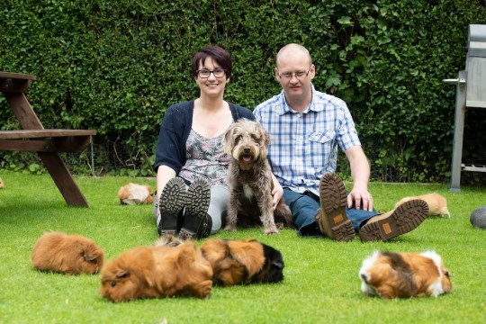 Sophie and Mark Mason from Waddington, Lincoln with their 52 guinea pigs.