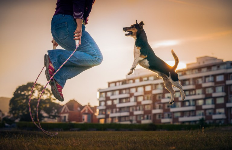 "Picture supplied by Zoltan Kecskes/Kennel Club/Bav Media 07976 880732. Picture called ?Let's jump rope together!? shows a Jack Russell Cross and came 2nd in Dogs at Play Category taken by Zoltan Kecskes. A stunning picture of a dog surrounded by magnolia has come top in the annual Dog Photographer of the Year contest. The photo of rescue dog Merlin was chosen as the overall winner in The Kennel Club's international competition, which received almost 7,000 entries from more than 70 countries. Denise Czichocki, from Switzerland, who took the photo of her 14-year-old Podengo, said: ""I am really proud and overwhelmed, I still can't believe it! There are so many good photographers out there and I won this title, it is absolutely amazing. ""I have always loved to take pictures of everything, and my passion for dog photography started when I had my own, I wanted to create lovely memories of all of them. Over the years I have developed my photography to become more emotional."" The contest had 10 categories: Portrait, Man's Best Friend, Dogs At Play, Dogs At Work, Puppy, Oldies, I Love Dogs Because - for entrants aged between 12 and 17 years old - Young Pup Photographer - for entrants aged 11 and under - and Assistance Dogs and Rescue Dogs. SEE COPY CATCHLINE Winners of Dog Photo of Year comp"
