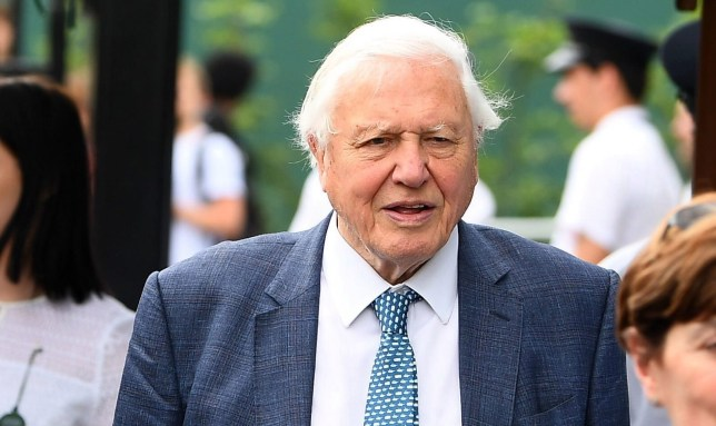 Sir David Attenborough on day eleven of the Wimbledon Championships at the All England Lawn Tennis and Croquet Club, Wimbledon. PRESS ASSOCIATION Photo. Picture date: Friday July 12, 2019. See PA story TENNIS Wimbledon. Photo credit should read: Victoria Jones/PA Wire. RESTRICTIONS: Editorial use only. No commercial use without prior written consent of the AELTC. Still image use only - no moving images to emulate broadcast. No superimposing or removal of sponsor/ad logos.
