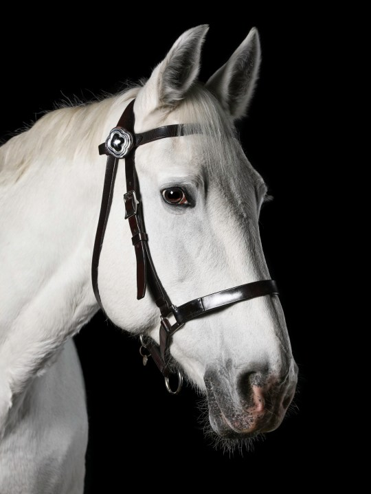 Police Horse Grace