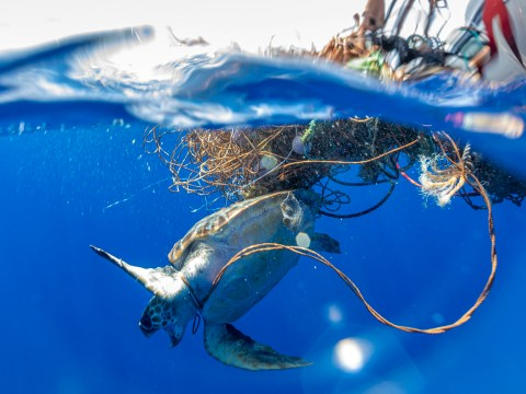 Heartbreaking pictures show turtle trapped in fishing nets