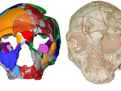 Discovery of oldest human remains ever found in Europe could rewrite story of our species