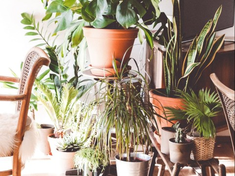 How to keep house plants alive during a heatwave