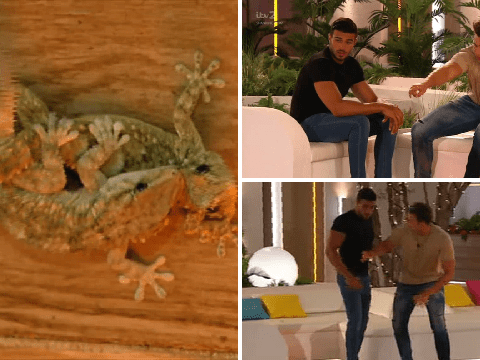 Love Island's awkward moment when two lizards are having more sex than the islanders