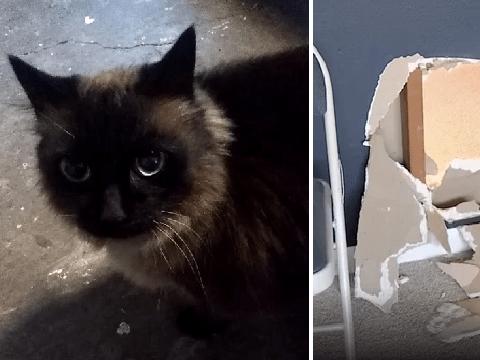 Police catch actual cat burglar called Spaghetti helping to raid house