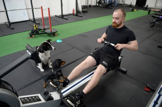 workout with your dog in the gym