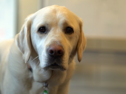 Dogs With Jobs: The dogs who give people with learning difficulties more independence