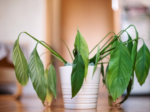 How to keep your plants alive while you are on holiday