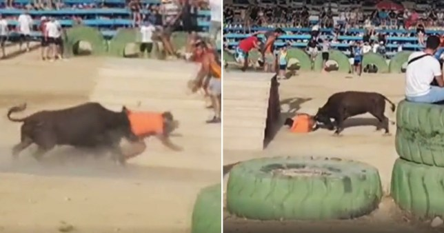 Man dies after bull gores him at Spanish festival in Alicante