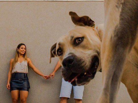 Hilarious dog photobombs his owners' engagement pictures