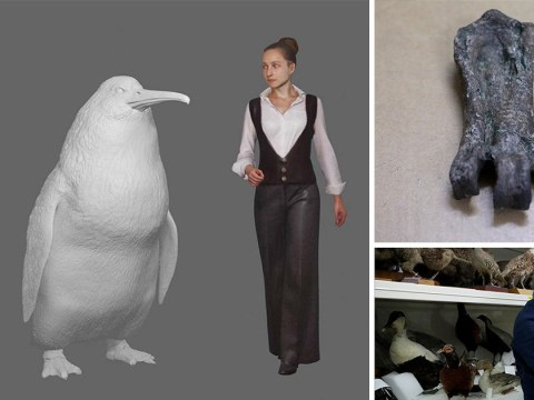 Giant fossil from penguin the size of a human found in New Zealand